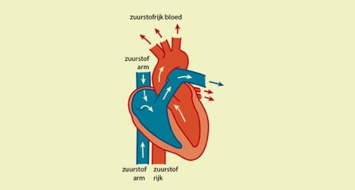 Hoe werkt mijn hart